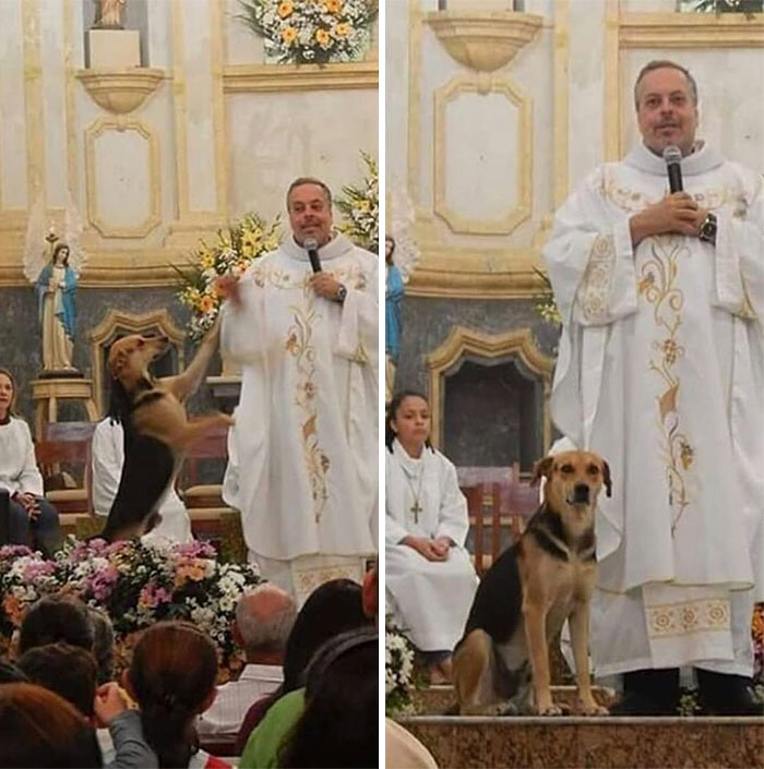 Priest Brings Stray Dogs To Mass So They Can Find New Families