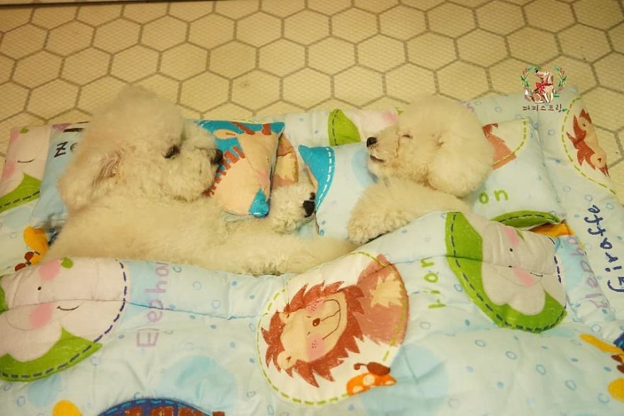 People Are Loving These 24 Photos Of Sleeping Pups In A Puppy Daycare Center