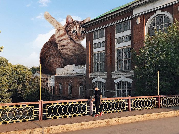 30 Hilarious Images Of What The Earth Would Look Like If Cats Were Bigger