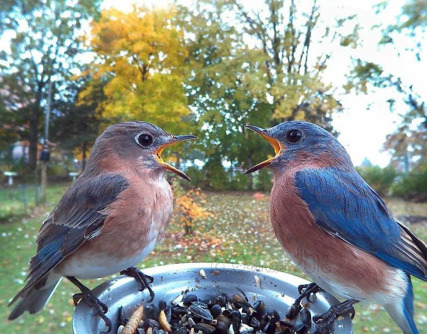 Someone Set Up A Feeder Cam For Birds In Their Backyard And The Pictures Are Incredible (45 pics)