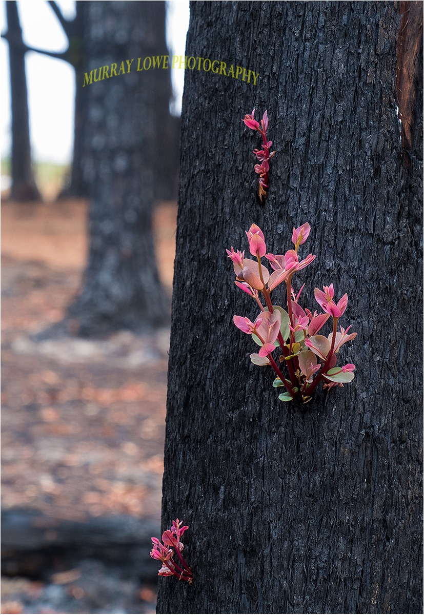Photos Show Australian Bush Coming Back To Life Just Weeks After Being Destroyed By Wildfires