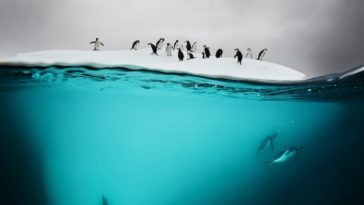 34 Incredible Above And Underwater Photos That Show A Glimpse Of What Lies Beneath The Water's Surface