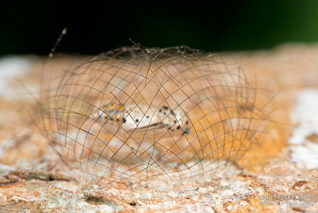 23 Mysterious Structures From Insects, The World's Smallest Architects