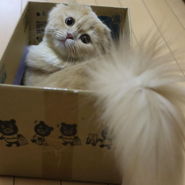 Meet Bell, The Adorable Cat That Has A Majestic Fluffy Tail Just Like A Squirrel