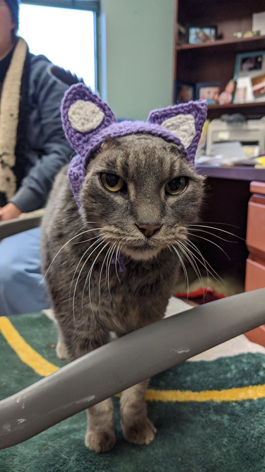 Stray Cat Gets New Crocheted Ears After Losing Them To Infections, Finally Finds A Forever Home