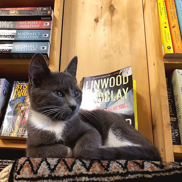 There's A Bookstore Where Kittens Roam Freely And Customers Can Adopt Them