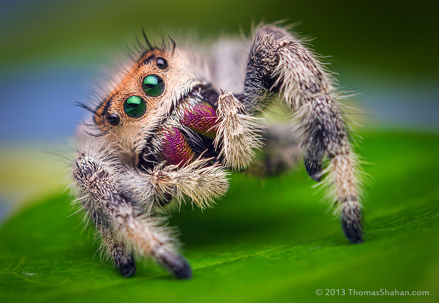 Turns Out, Spiders Have Tiny Paws And It's Actually Kind Of Adorable (21 pics)