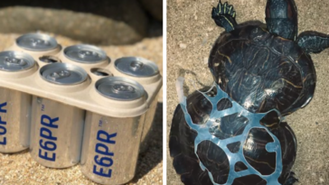 Brewery Creates Edible 6-Pack Rings That Feed Sea Turtles Instead of Killing Them