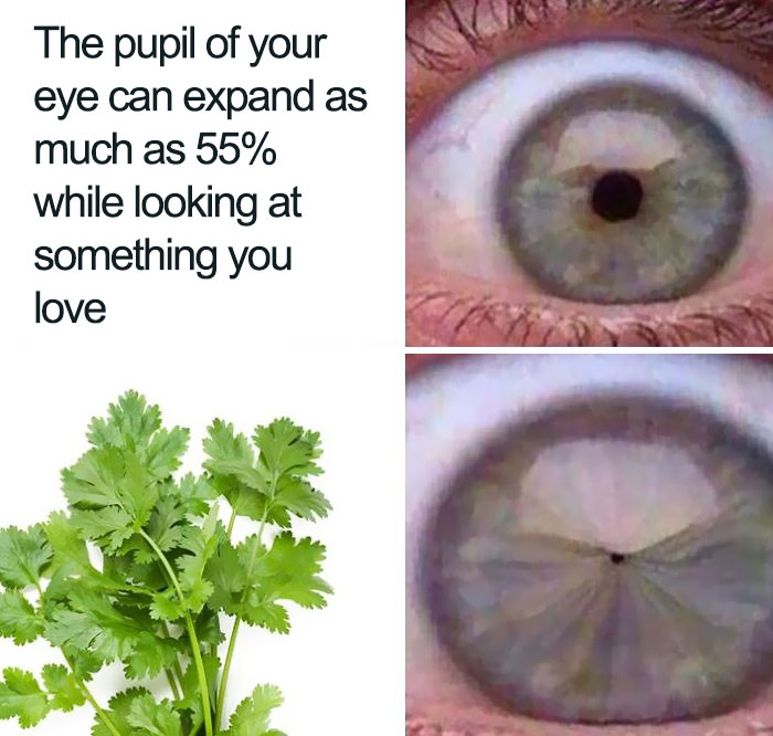 There's A Massive Facebook Group Dedicated To Hating Coriander (Cilantro) And Here Are 30 Hilarious Images