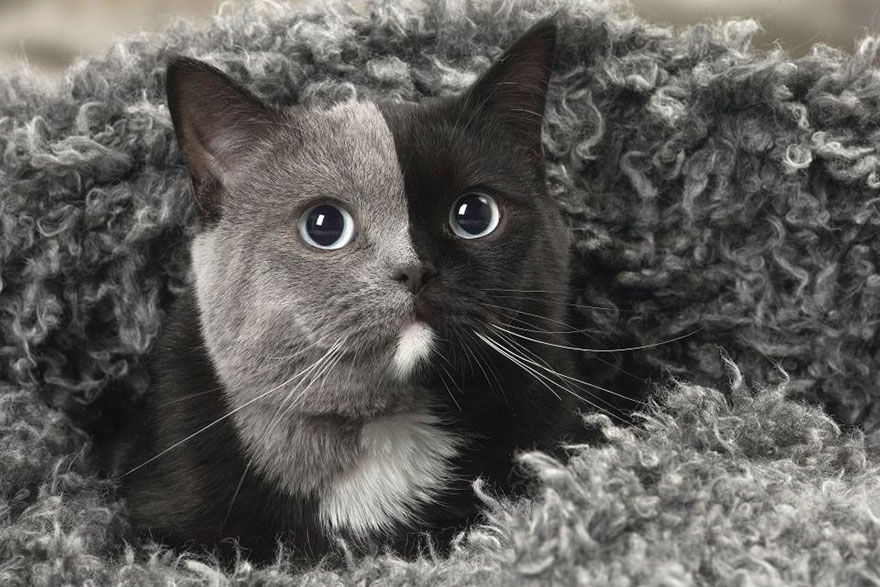 Rare Kitten Born With 'Two Faces' Grows Up To Be The Most Adorable Cat Ever