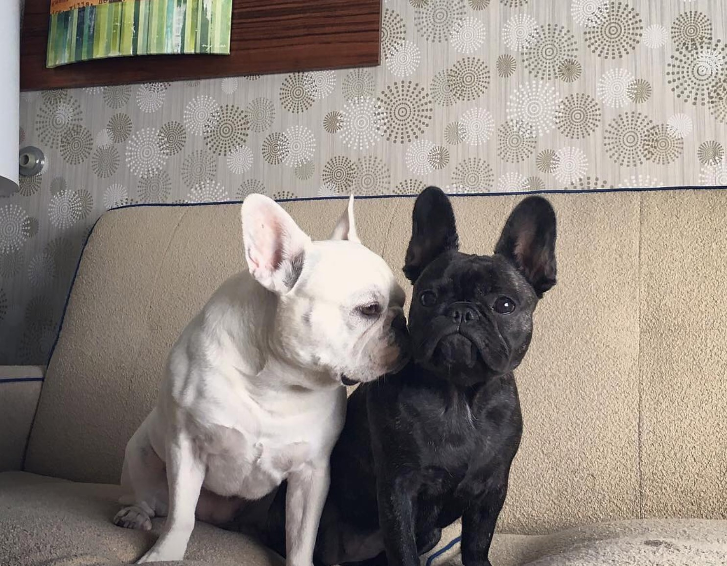 This Hotel Lets Guests Foster Dogs During Their Stay And They Can Even Adopt Them Afterward
