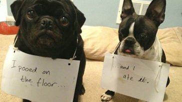 30 Of The Naughtiest Dogs In The World Being Shamed For Their Crimes