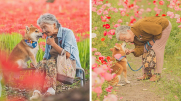 Photographer Captures 30 Heartwarming Photos Of His Grandma And Her Shiba Inu