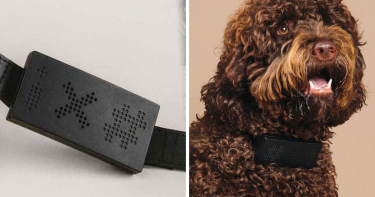 You Can Get A Collar That Translates All Your Dog's Barks Into Curse Words
