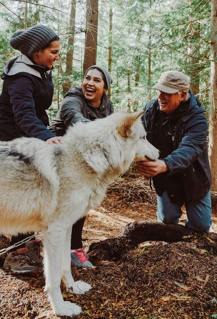 Apparently, There Is An Island You Can Visit That's Full Of Friendly Wolves