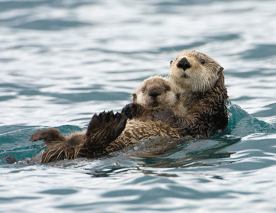 24 Adorable Parenting Moments In The Animal Kingdom To Put A Smile On Your Face