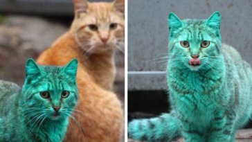 Stray Cat From Bulgaria Accidentally Turned Itself Green