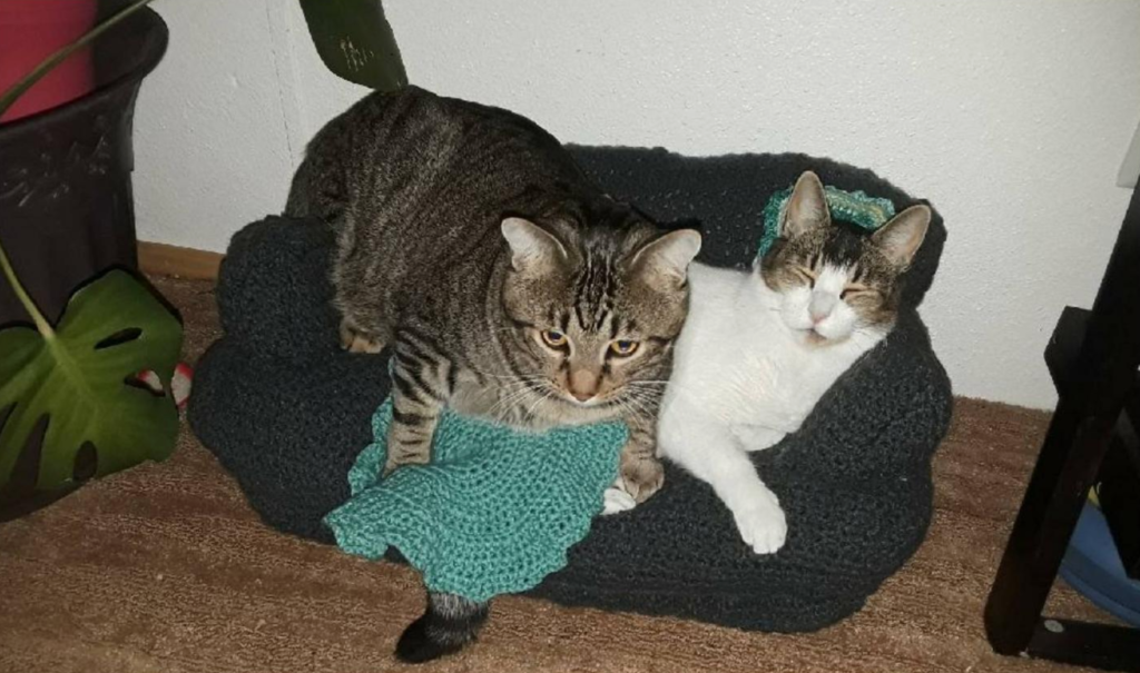 People Are Crocheting Miniature Couches For Their Cats (18 Pics)